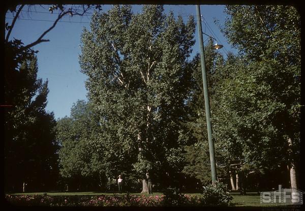 Shaunavon park..  Shaunavon.  07/24/1957