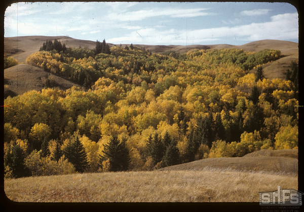 Pine Cree Park - from Hillcrest Drive.  South Fork.  09/25/1956