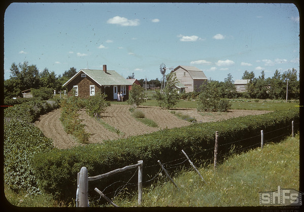 Harold Simpson's home and yard.  Shaunavon.  07/18/1950