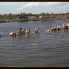 Co-op school learning to swim.  Swift Current.  07/09/1956