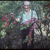 R. P. Robbins - World Wheat King 1950 - with plums..  Shaunavon.  09/08/1953