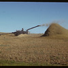 Herman Kemper threshing.  Stone P.O..  06/09/1952