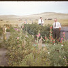 Rebbeck Garden.  South Fork.  09/07/1952