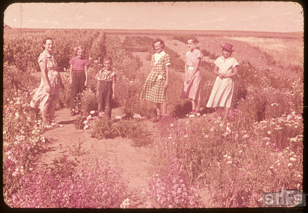 The Mike Sand flower garden..  Shaunavon.  08/12/1953