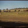 Shaunavon Fair - begining chuck wagon race.  Shaunavon.  07/22/1953