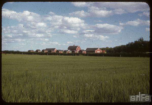 Everett Boulten Graineries.  Simmie.  08/09/1955