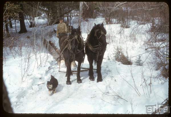 Trailing Logs on creek.  South Fork.  03/17/1957