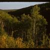 Porcupine Forest.  Hudson Bay.  09/10/1956