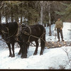 Bill Smith hauling logs over South Fork Creek.	 South Fork.	 03/17/1957