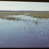 Slough 2 miles NE of Shaunavon..  Shaunavon.  06/10/1951