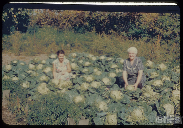 Mrs. Roy Force and Kay in the cabbage patch..  Shaunavon.  09/22/1952