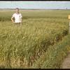 Barley Variety Test.  Simmie.  08/09/1955