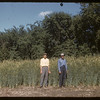 Tall rye - experimental farm.  Swift Current.  07/13/1955