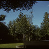 Campbell lawn.  Shaunavon.  07/13/1950