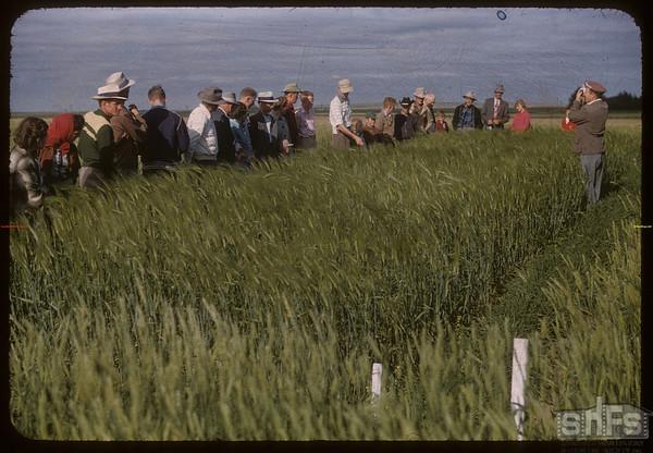 Test plot supervisors visit Garth Simpson's plot.  Shaunavon.  07/27/1956