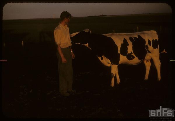 Lloyd Hunter and favorite Holstein.  Shaunavon.  07/01/1957