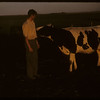 Lloyd Hunter and favorite Holstein.  Shaunavon.  07/01/1957