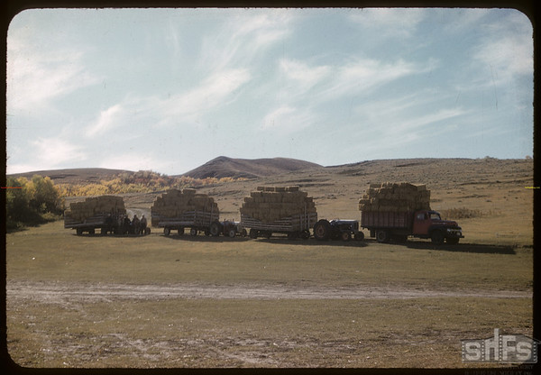 Mergel's hauling baled hay.  Wood Mountain.  09/25/1957