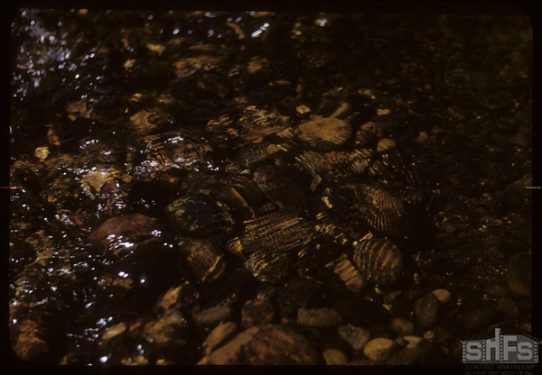 Rippling waters in Mountain  Stream.  South Fork.  08/20/1950
