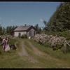 Mrs. A. B. Duignan's north lilacs.  Stone P.O..  06/09/1952