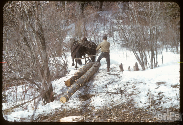 Trailing Logs to Brindges.  South Fork.  03/17/1957