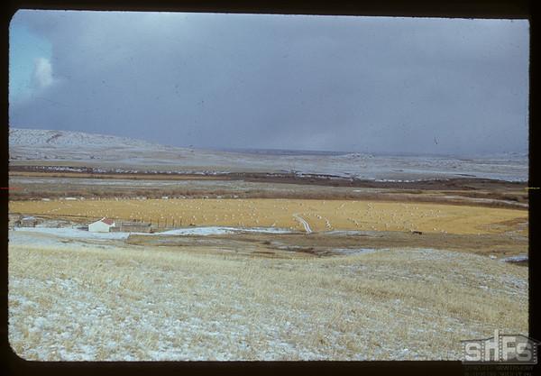 Sun on the stooks - J. E. McNabb ranch.  Val Marie.  10/31/1951