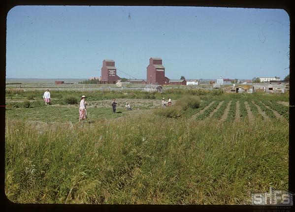 Le Mire's garden.  Val Marie.  07/05/1951