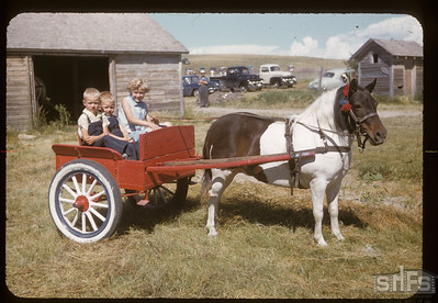 Frank Dunham's pony and cart, Admiral, 08/05/1955