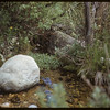 Springs. Starting S. Fork of Swift Current.  South Fork.  06/14/1953