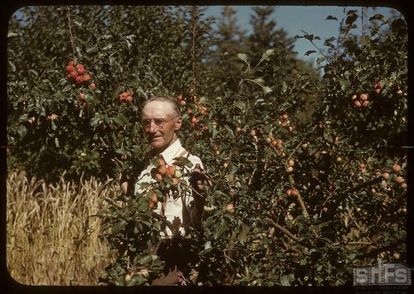 Dick Robbins in apple orchard..  Shaunavon.  09/03/1950