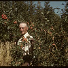 Dick Robbins in apple orchard..  Shaunavon.  09/03/1950