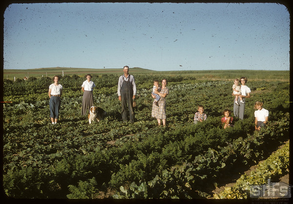 Mike Sand family at home..  Shaunavon.  07/28/1955