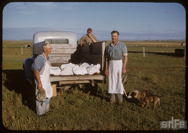 Pioneer beef ring. Harold Grubbe delivery. Shaunavon 08/26/1950