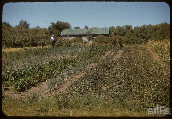 Spencer garden..  Shaunavon.  08/19/1956