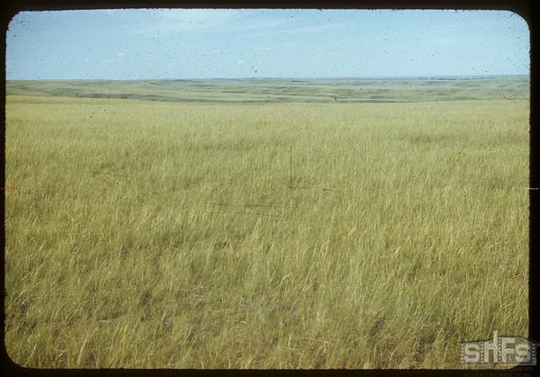 Looking NE toward Broncho.  Val Marie.  07/17/1953