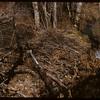 Beaver dam- Pine Cree Park.  South Fork.  10/09/1954