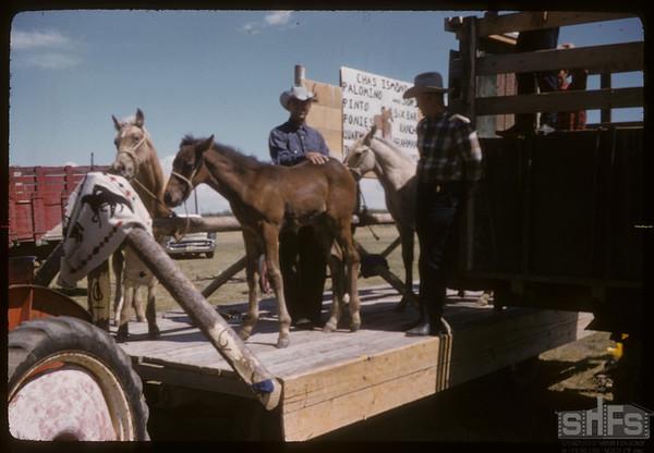 Shaunavon rodeo - Chas Ismond's colts.  Shaunavon.  07/23/1957