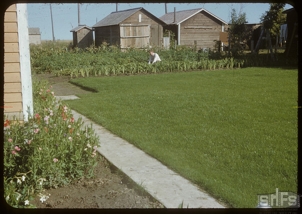 Don Beckwith lawn.  Shaunavon.  09/06/1951