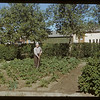Henry Bref at 83 years of age - in his garden.  Val Marie.  07/06/1951