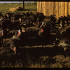 Mrs. C. B. McCoy's turkeys, Aneroid, 07/03/1951