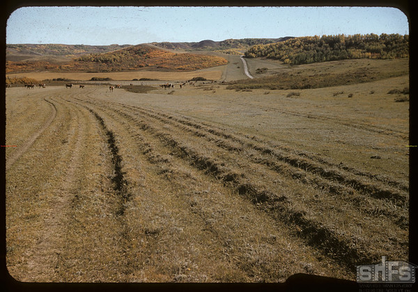 Wood Mountain to Willow Bunch trail - south of Wood Mountain.  Wood Mountain.  09/25/1957