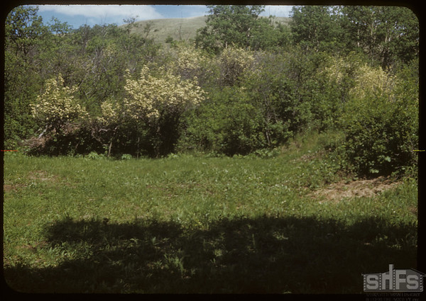 Recreation Spot on the S. F. of Swift Current.  South Fork.  06/14/1953