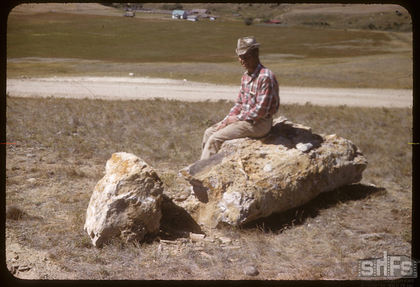 Lyle Bathgate Petrified Tree.  South Fork.  08/05/1958