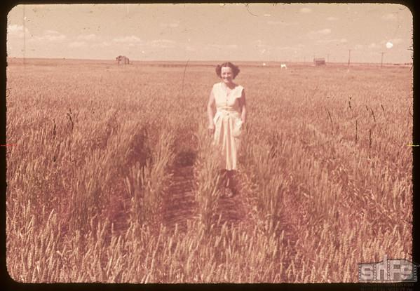 Mrs. Wiiliam Voll in son Bill's test plot.  Shaunavon.  08/12/1953