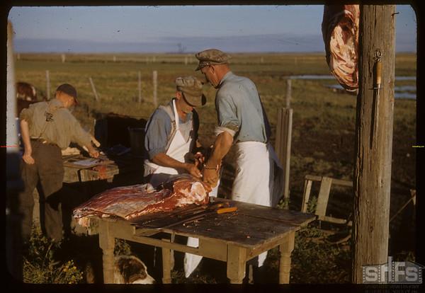 Beef ring - bagging.  Shaunavon.  08/26/1950