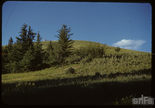 South Fork Park Lands. Looking  Up from Creek.  South Fork.  07/23/1950