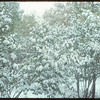 [Heavy snow in] Shaunavon Park..  Shaunavon.  09/30/1954