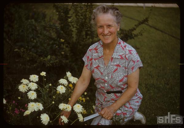Mrs. W. E. Sharp and Shasta Dasies..  Shaunavon.  07/13/1950