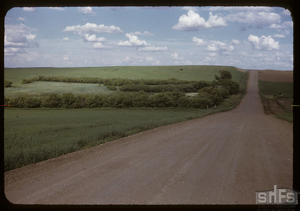 Horse Radish in flower - road Glentworth to Wood Mountain.  Wood Mountain.  06/18/1955
