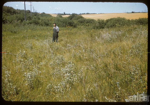 Dick Surridge on Old Fort Pelly to Fort Qu'Appelle Trail.  Wawota.  08/09/1957
